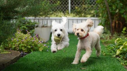Is-pet-dog-urine-killing-your-plants