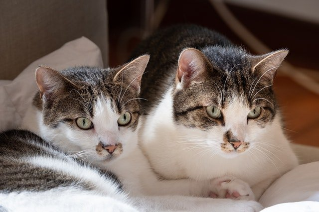 cat-litter-box-problems-answers-to-common-questions/