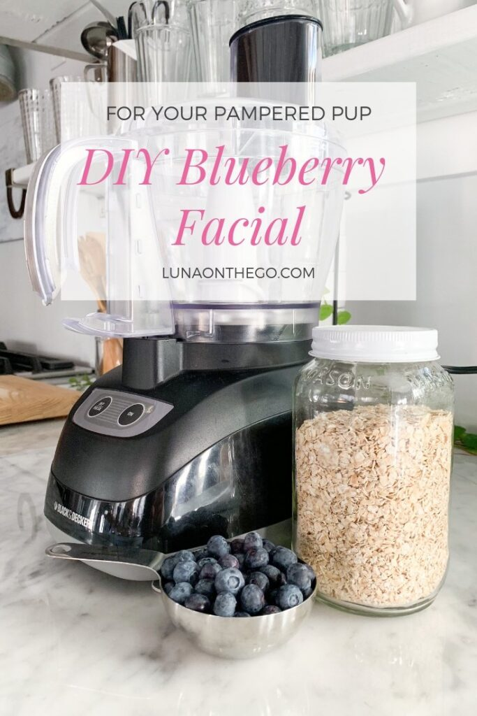 Blue berry facial for dogs