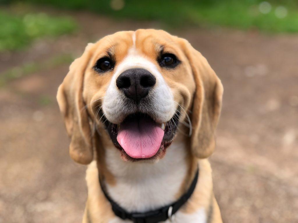 dog body language smiling