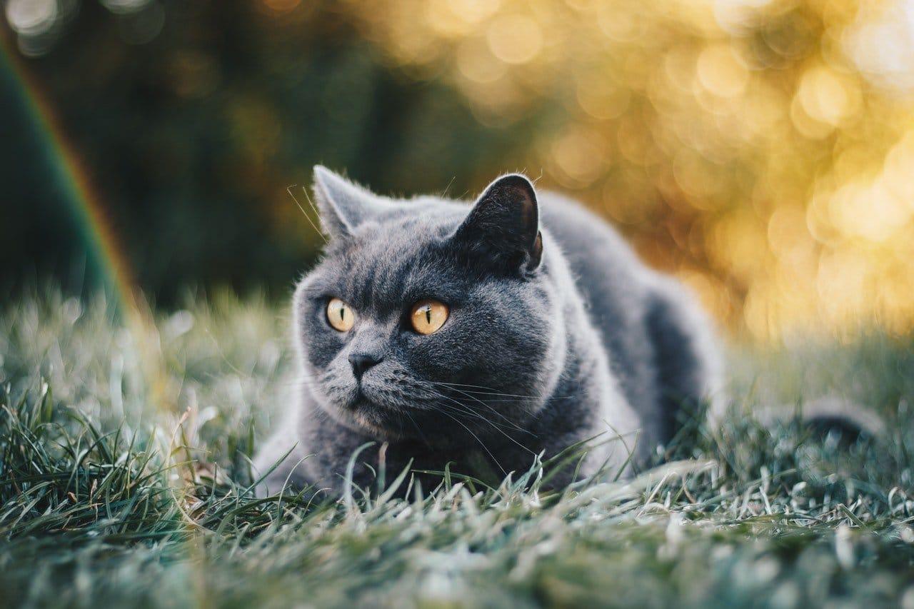 should i have a pet cat