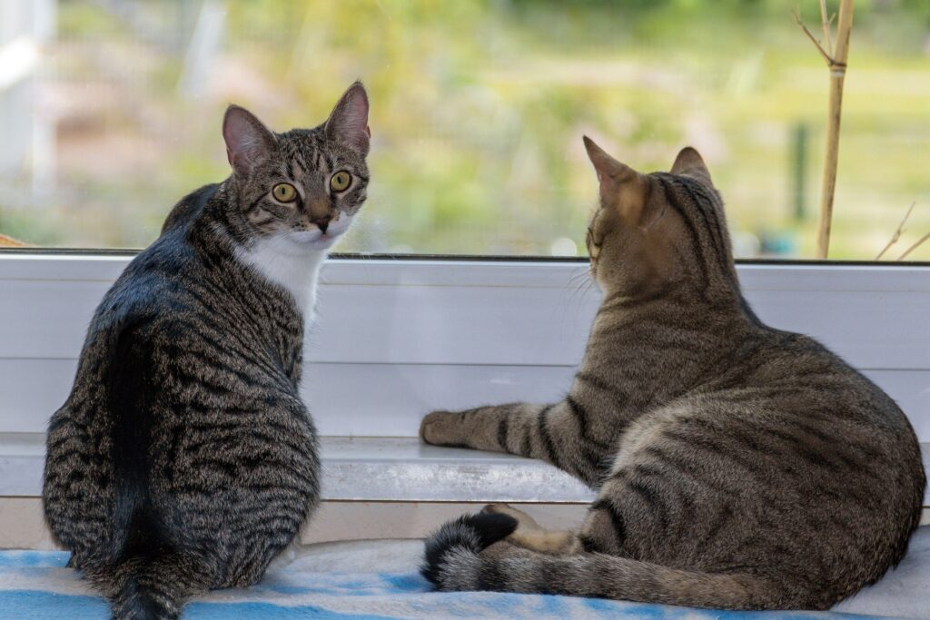 10 tips to stop overgrooming in cats