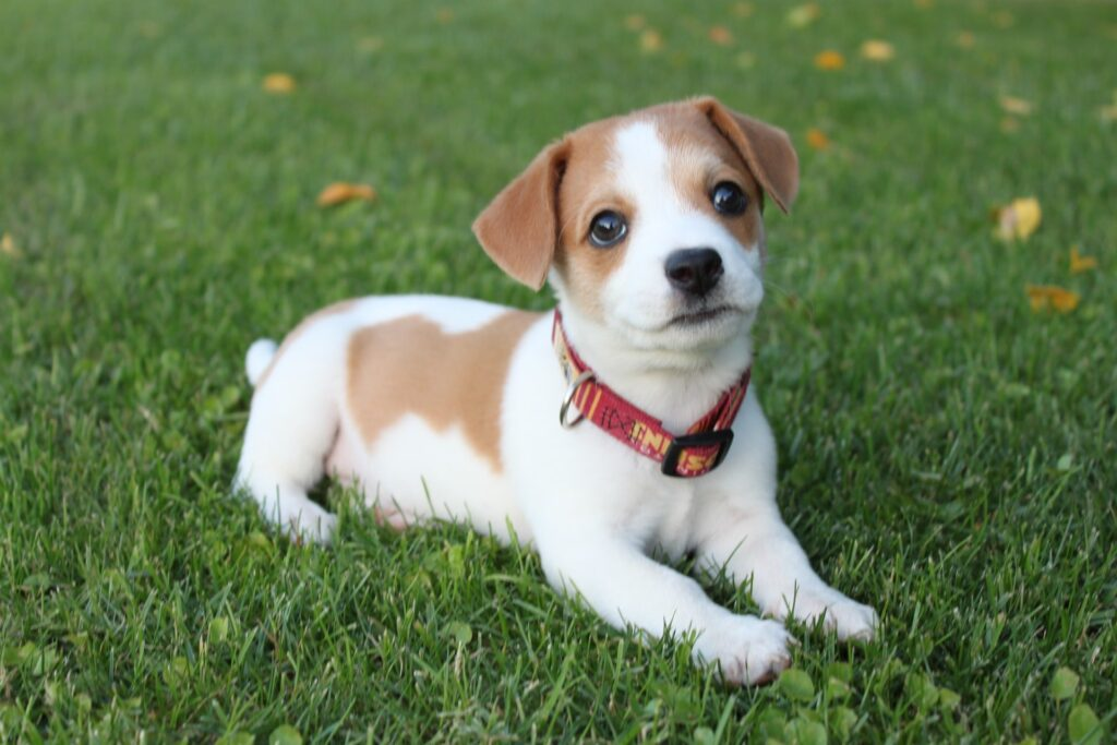 How to potty train a puppy - pick a spot