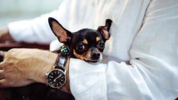 dog breeds for seniors