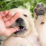 how to make a puppy stop biting