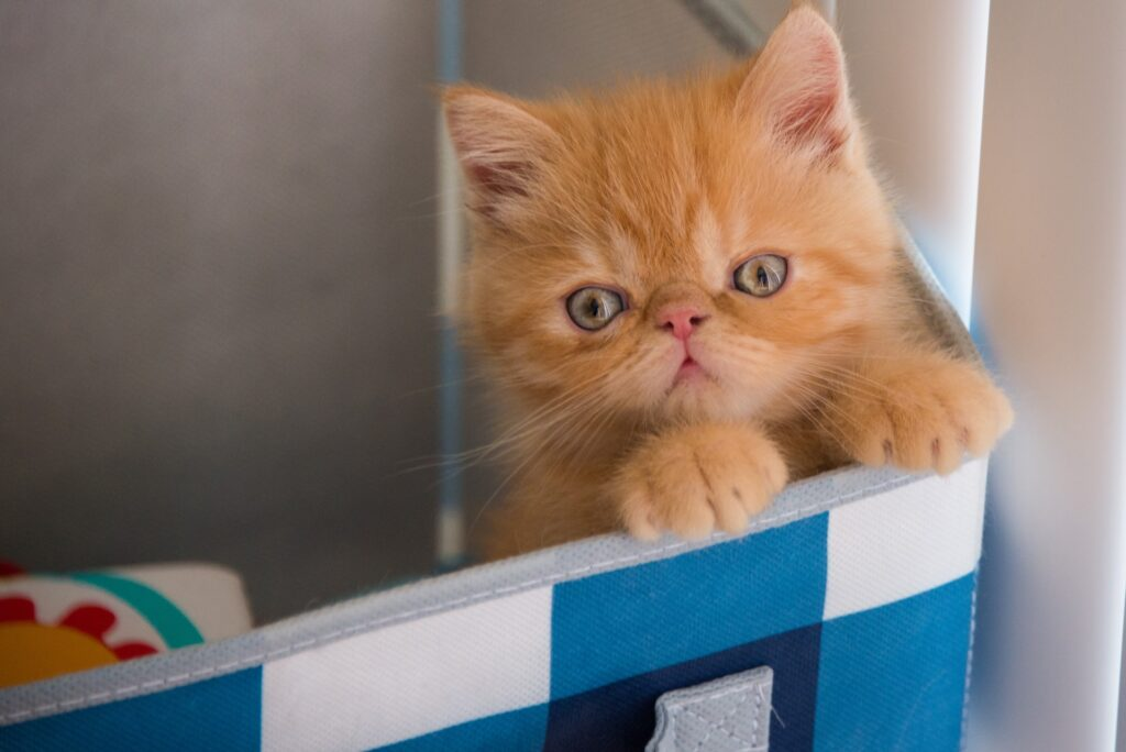 Things you need for a new kitten