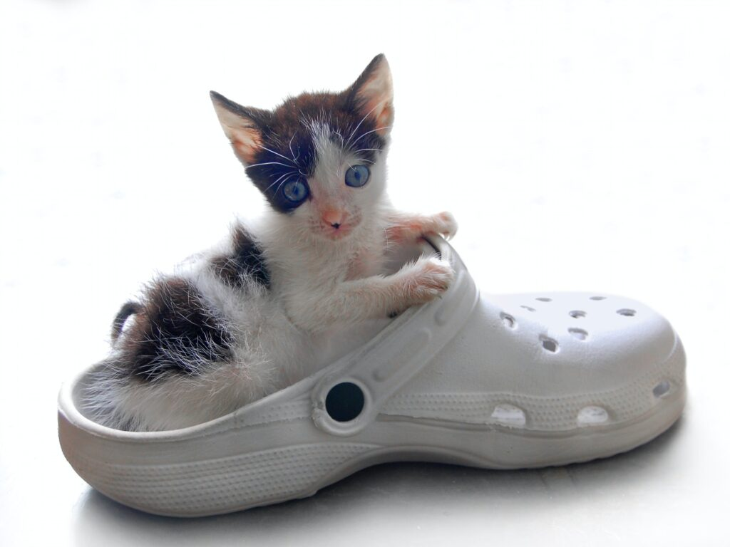 Getting your home ready for your new kitten