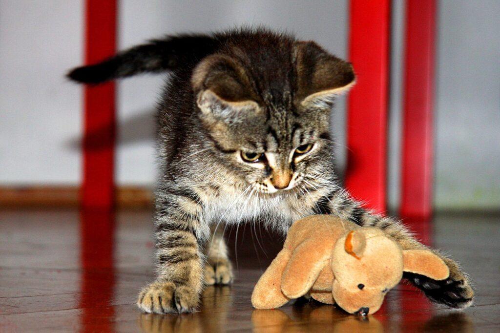 training your kitten