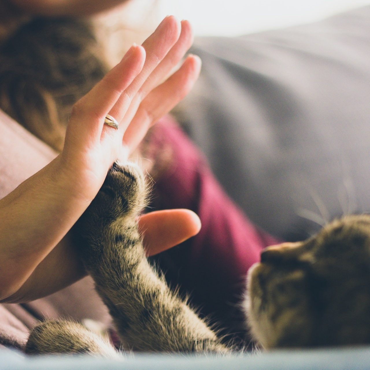 training your kitten to give you a high five