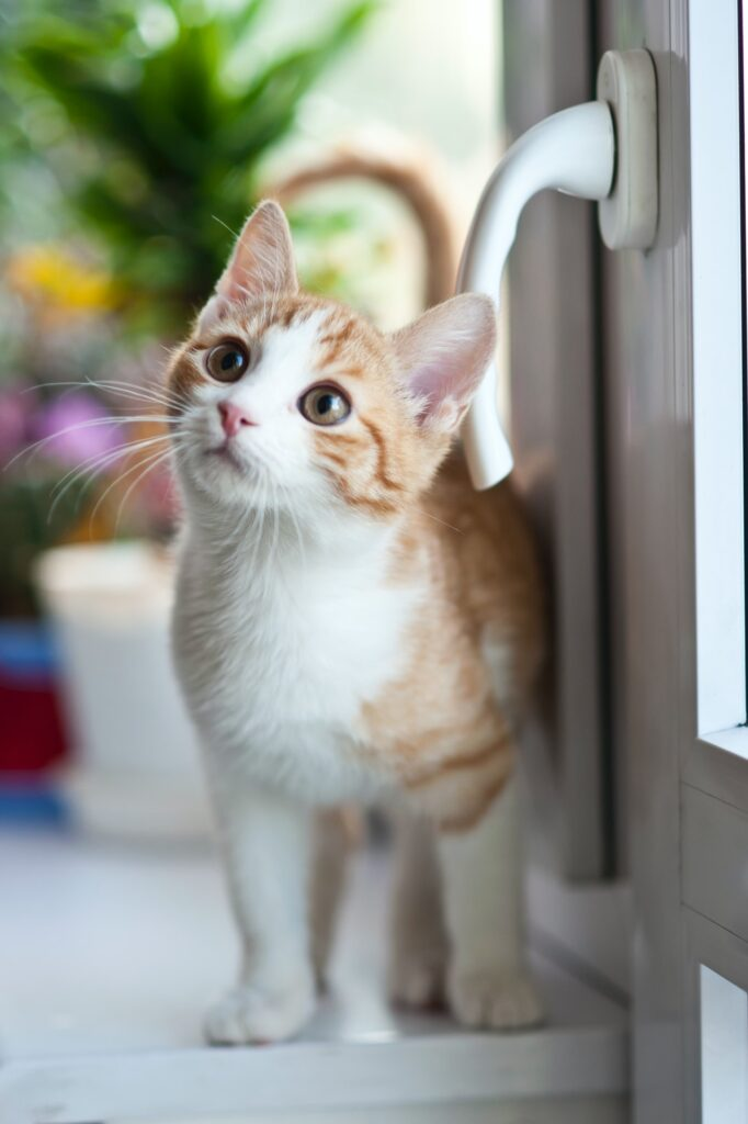 use positive reinforcement for training your kitten