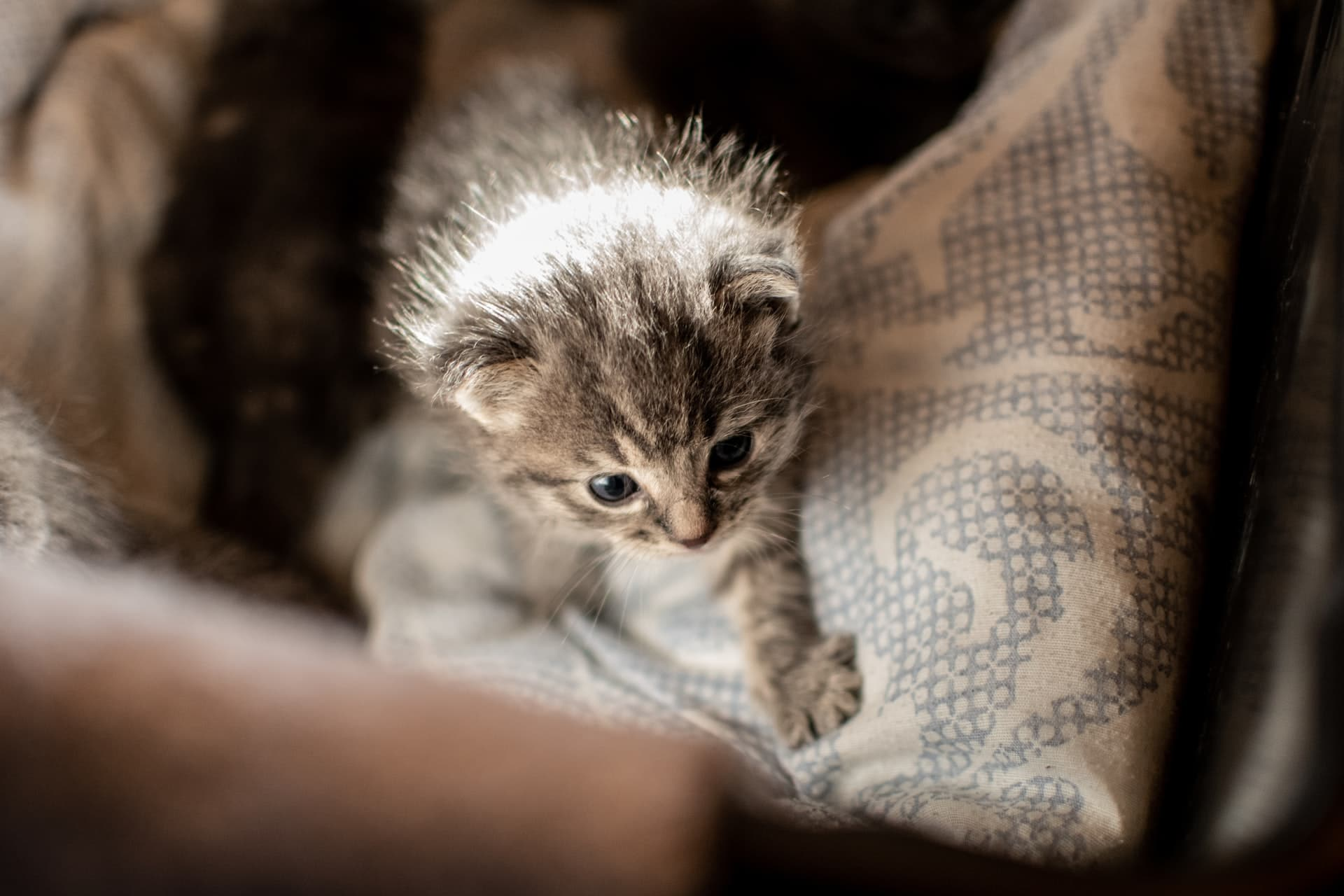 kitten crying bed