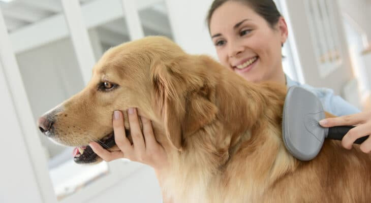 How to keep fleas off dogs