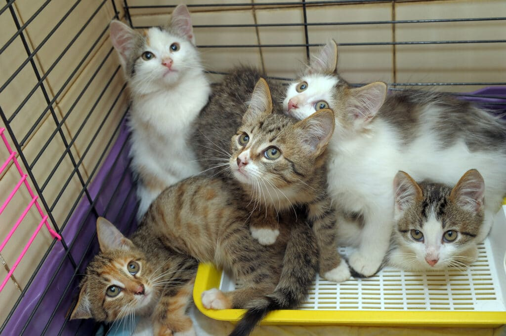 Handling wild kitten