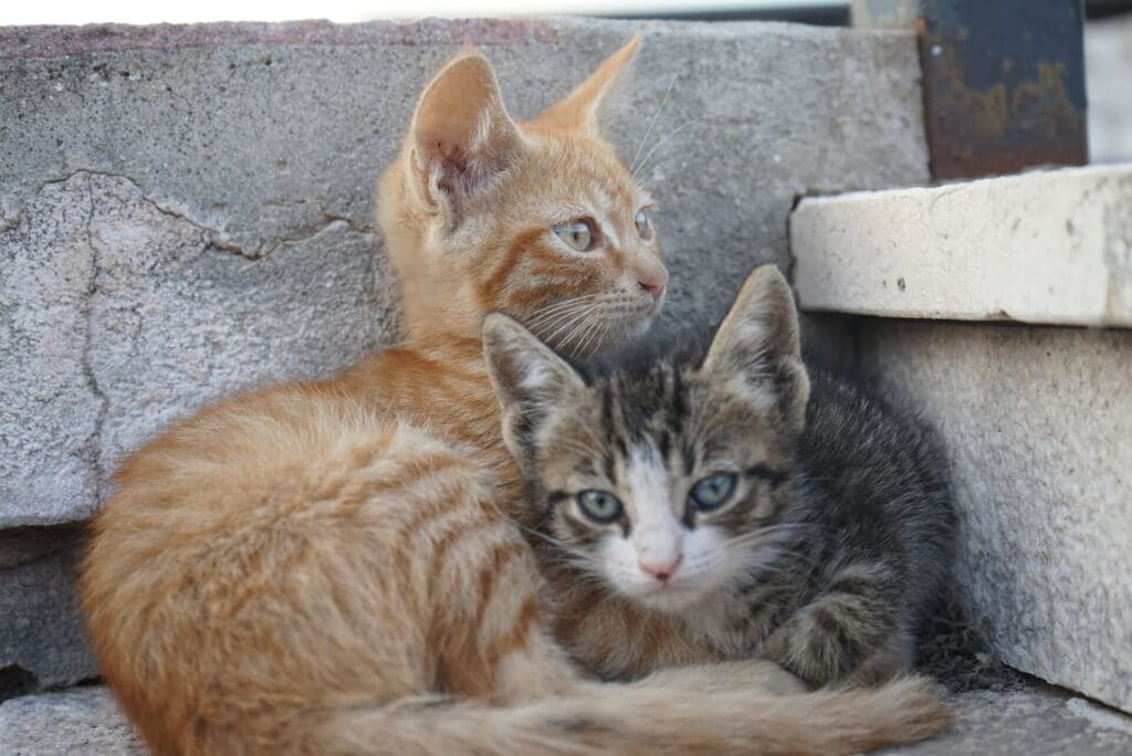 How to tame a kitten? Why taming a wild kitten is important?