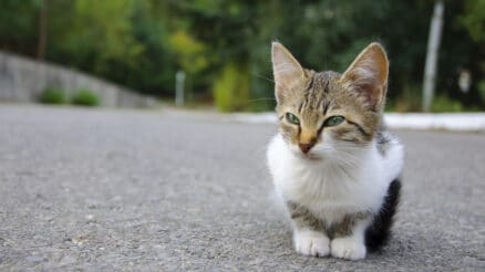 How to tame a wild kitten
