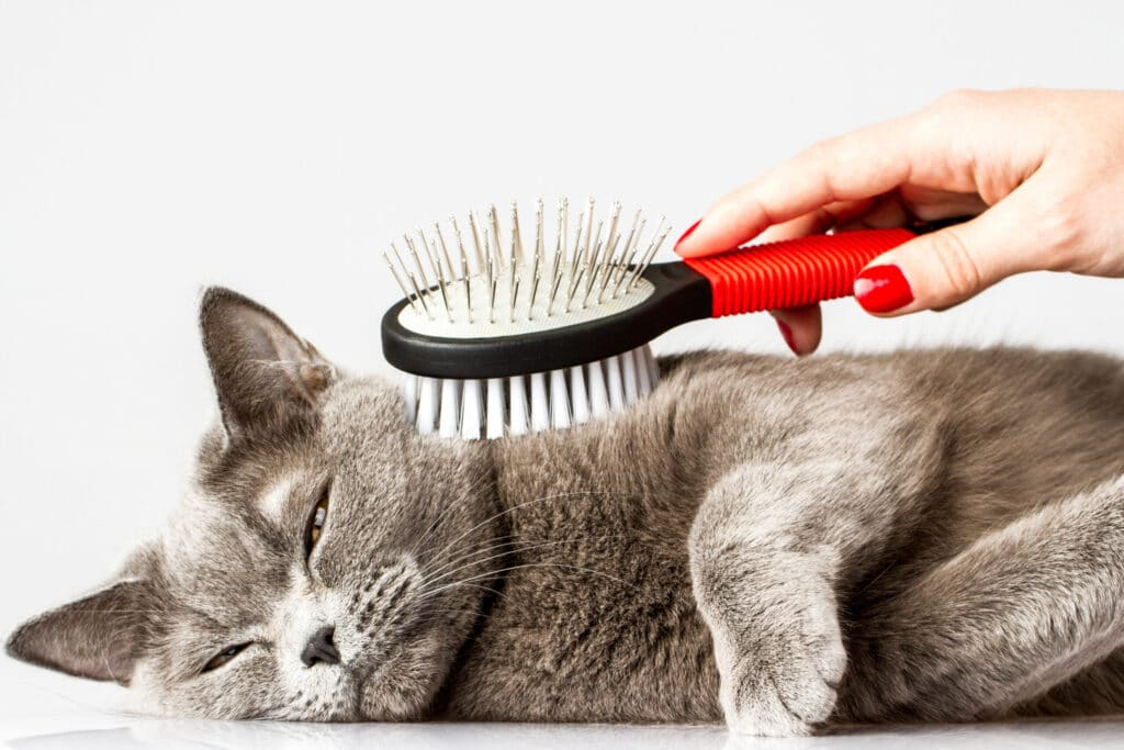 Brushing to manage excessive shedding in your cat