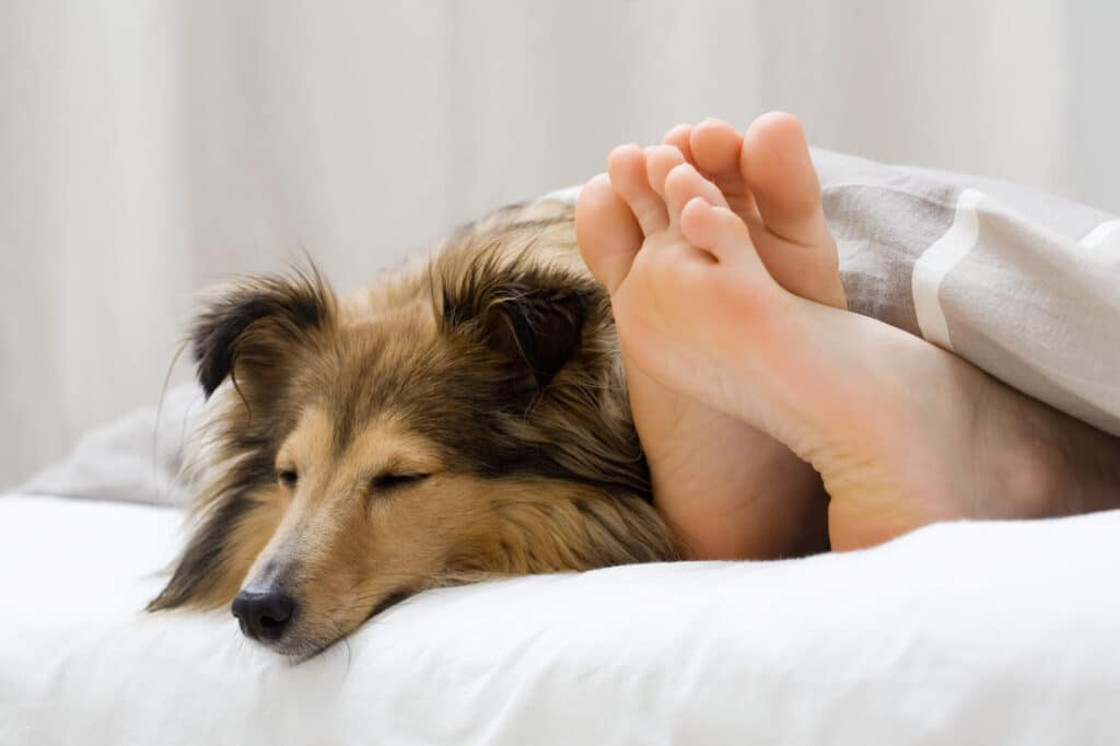 How to stop my dog from peeing on my bed?