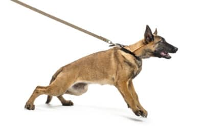 How to get your dog to stop barking at other dogs?