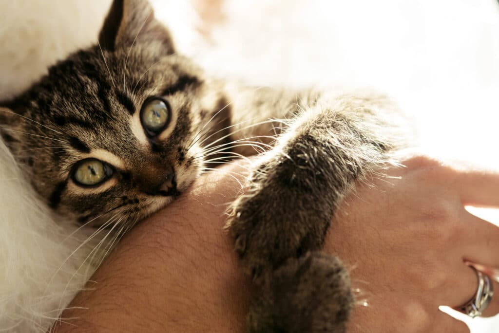 How to stop a kitten from biting?