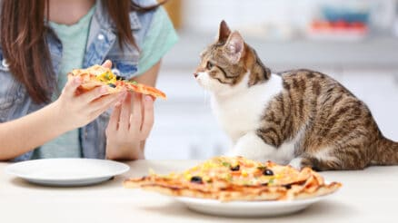 What kind of human food can cats eat?
