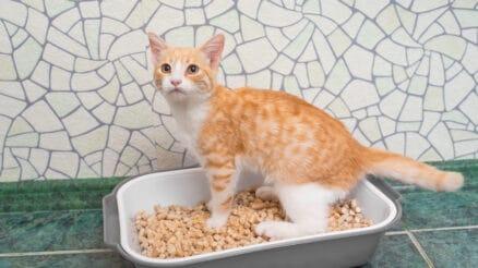 litter alternatives for cats