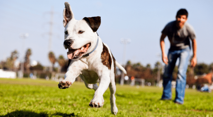 How to stop a dog from jumping up on strangers