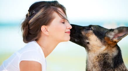 What does it mean when a dog licks your face