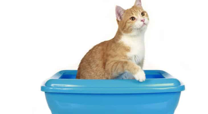 Why do cats poop outside the litter box