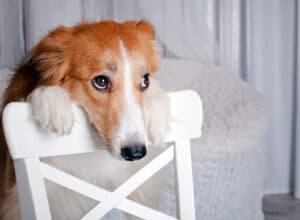 Signs a dog is depressed